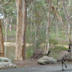 emus-2015